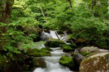 長野県栄村の渓流