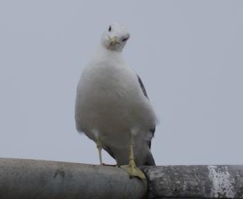 寺泊港の鳥