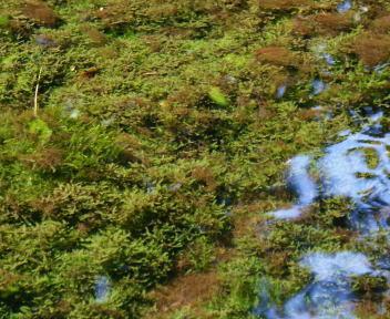 竜ヶ窪の水