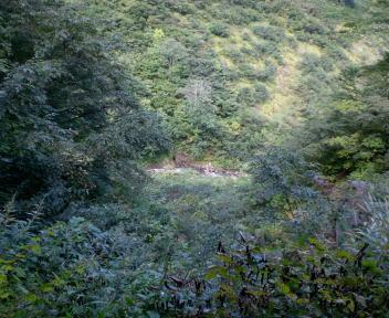 登山道脇の沢