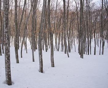 美人林 冬