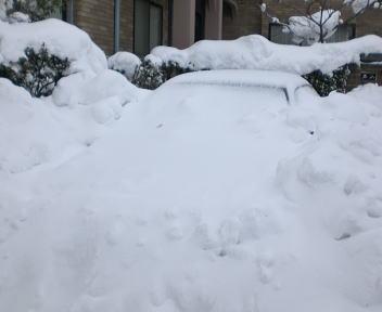 新潟の大雪2010 近所