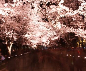 高田城百万人観桜会 さくらロード