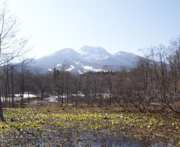 妙高山と水芭蕉