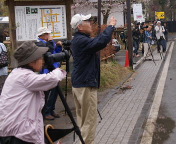 角館の桜まつり 武家屋敷通り 樺細工伝承館 カメラマン