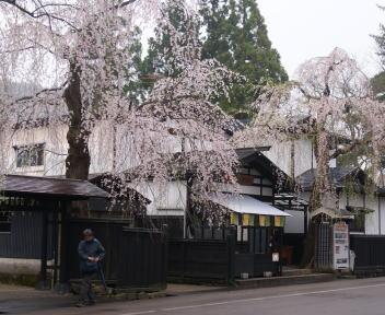 角館の桜まつり 武家屋敷通り まるかわ