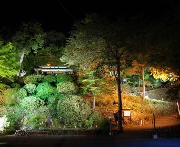 楽山苑ライトアップ