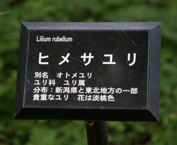 越後三条・高城ヒメサユリ祭り ひめさゆり表示板