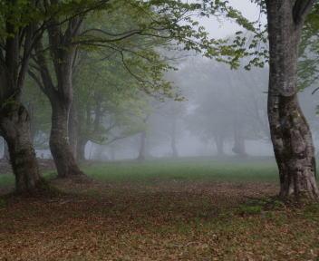 笹ヶ峰 霧