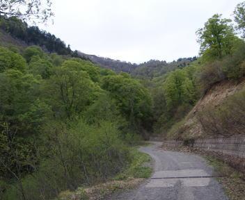 笹ヶ峰 林道 新緑