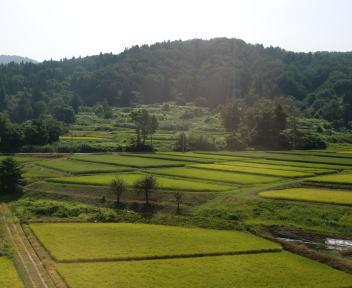 残暑の田園