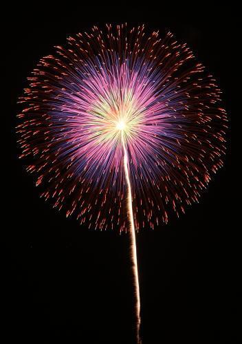 第84回全国花火競技大会 小松煙火工業 昇曲導五重芯変化菊