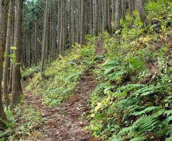 日本国 小俣登山道①