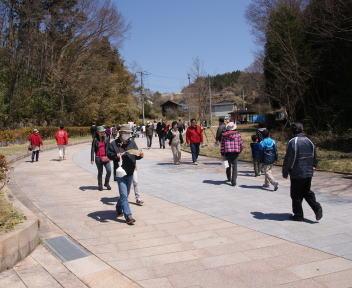 三春滝桜 歩道