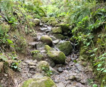 角田山 湯の腰コース③