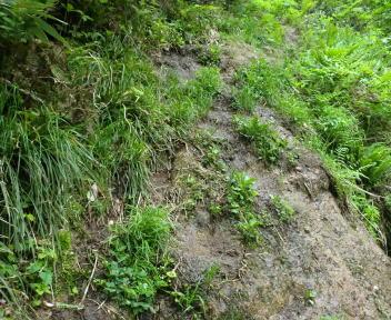 松平山 コース