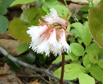 朴坂山 花