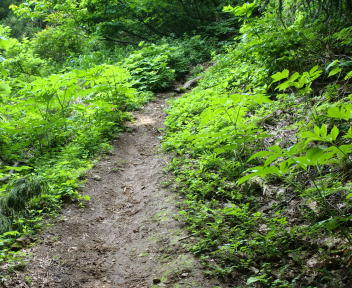 米山 下牧コース