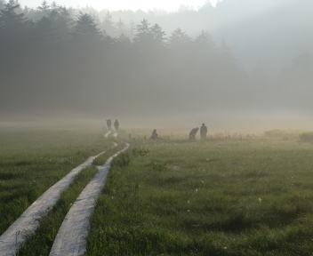 尾瀬 大江湿原