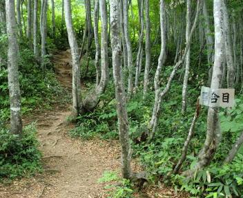 二王子岳 登山コース 4合目
