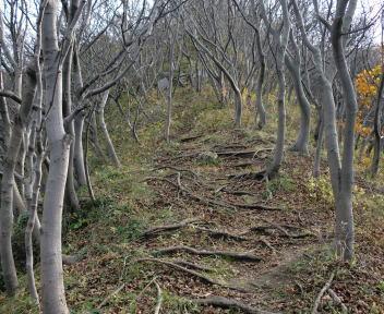 角田山 小浜コース ⑨