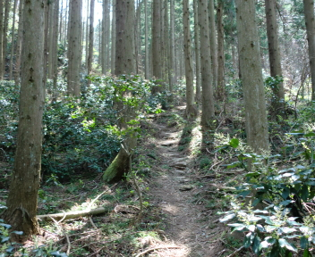 角田山 此の入沢コース ④