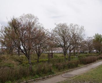 北山池公園 ④