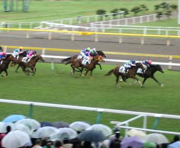 新潟春競馬 レース