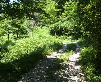 宝珠山 赤松山コース 森林公園①