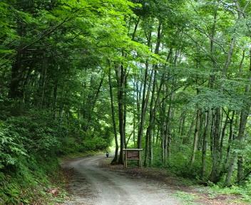 湯の平温泉 植物群落保護林