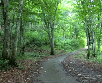 湯の平温泉 ブナの森