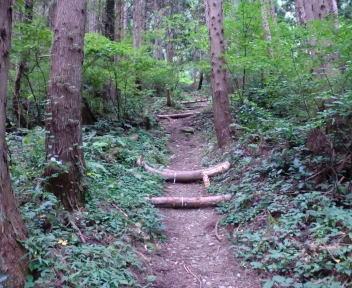 大蔵山~菅名岳 登山口~1合目⑥