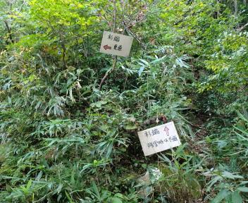 菱ヶ岳 登山口~菱ヶ岳⑨