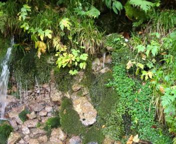 以東岳 大鳥登山口~大鳥池 水場④