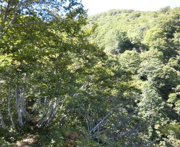 菱ヶ岳14