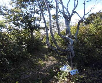 菱ヶ岳24