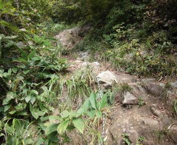 焼峰山13