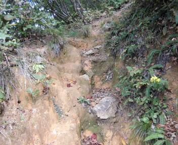 焼峰山15