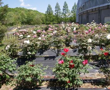 新潟県立植物園②