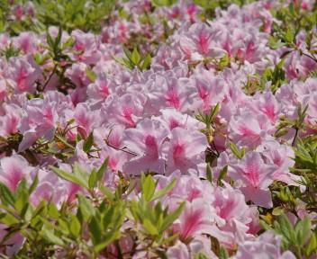 新潟県立植物園④