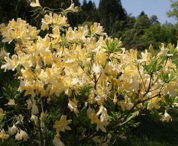 新潟県立植物園⑤