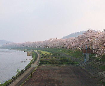 角館 桧木内川
